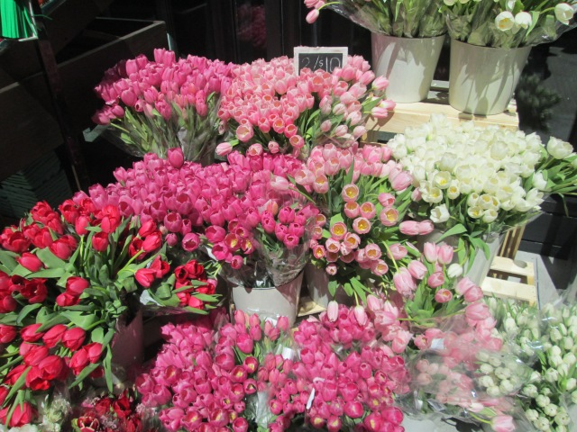 pink tulip display